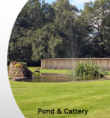 Pond-Cattery